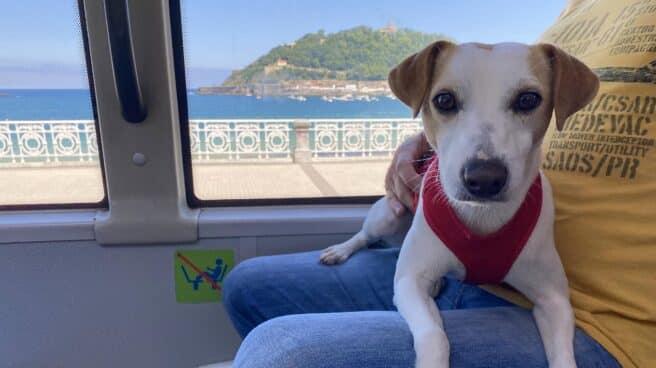 Pipper en el bus urbano de Donostia