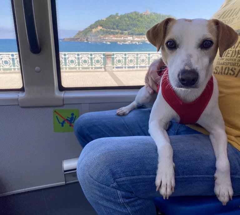 Viajar con perro atado y sin trasportín en los autobuses urbanos ya es posible en 7 ciudades españolas