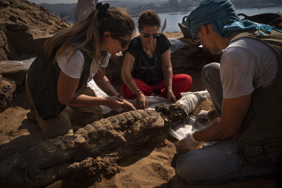Miembros del equipo de Qubbet el Hawa con un cocodrilo momificado hallado en la excavación