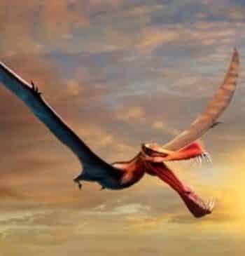 """El dinosaurio volador de Australia: """"Es lo más parecido que tenemos a un dragón"""""""