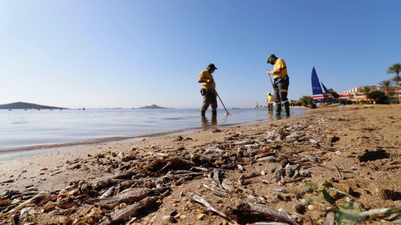 De la 'sopa verde' a la 'sopa marrón' del Mar Menor, claves de un desastre anunciado