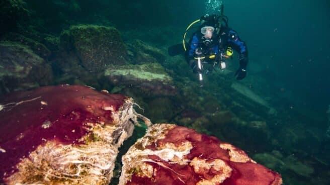 imagen submarina de un buzo