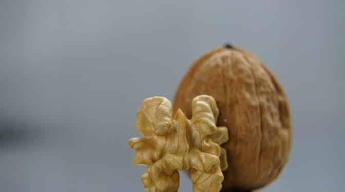 El consumo de nueces y el aumento de la esperanza de vida