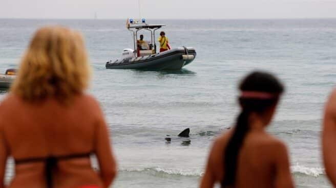 Bañistas miran curiosos hacia la orilla de la playa de Poniente, donde se halla un tiburón azul
