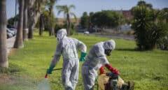 Ingresada una persona de Sevilla infectada de Virus del Nilo