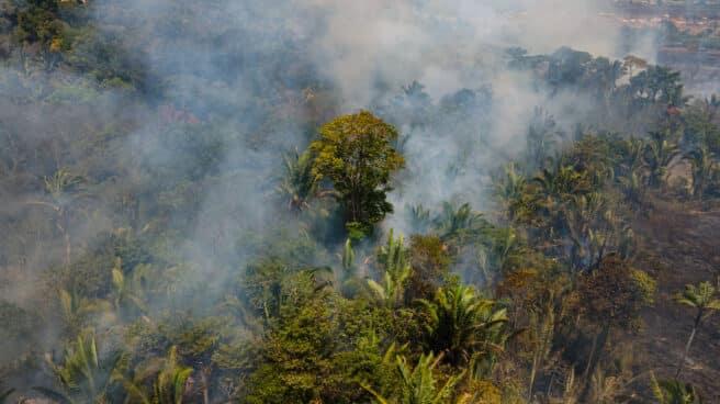 Las llamas arrasan con el Amazonas