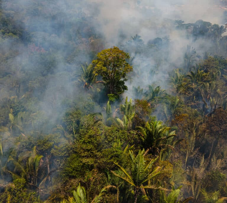 El plan de Banco Santander para dar oxígeno a la selva amazónica