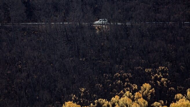 n coche circula en la zona del puerto de Las Peñas Blancas, Estepona (Málaga), entre los arboles quemados por el incendio de Sierra Bermeja que ha arrasado 9.670 hectáreas en el sudoeste de la provincia malagueña