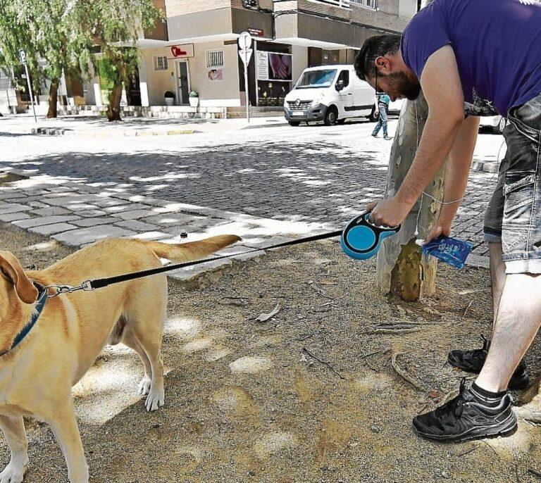 Valencia obligará a los dueños de los perros a limpiar sus orines