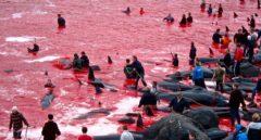 Grindadràp, la tradición más cruel de las Islas Feroe
