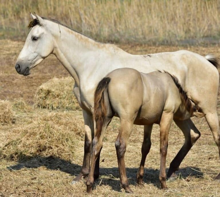 Los casos de ántrax en Badajoz suben de uno a seis y afectan a vacas y caballos