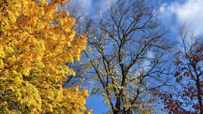 hojas de árboles