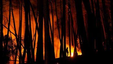 Más de 400 desalojados por el incendio forestal de Sierra Bermeja (Málaga)