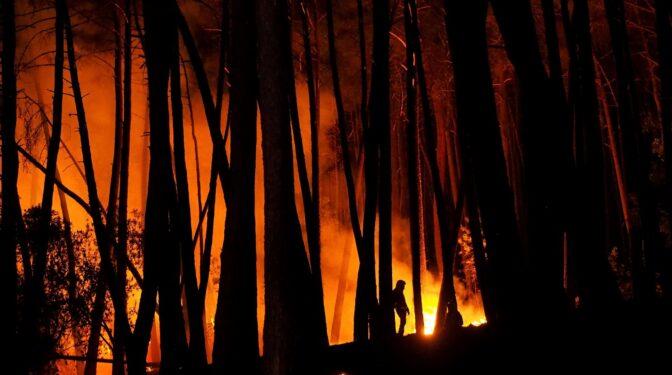 La Junta de Andalucía confirma que el fuego en Sierra Bermeja ha sido intencionado