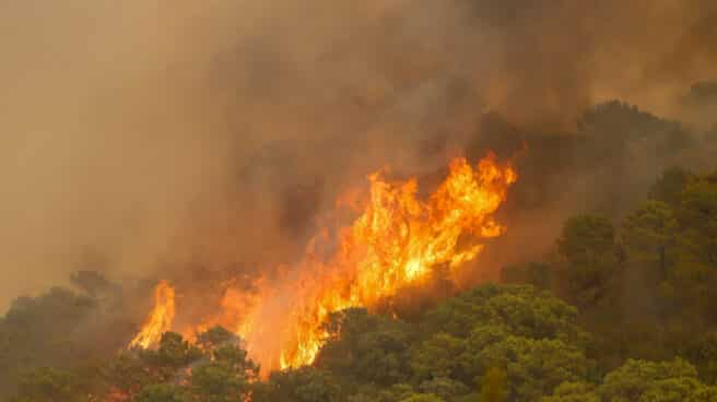 Incendio de Sierra Bermeja (Málaga)
