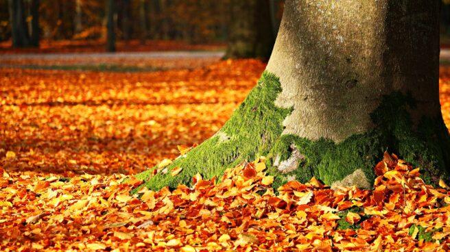 Imagen de hojas de otoño caídas a los pies de un árbol