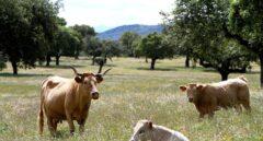 Ántrax, la enfermedad de los campos malditos que no se detectaba en España desde 2004