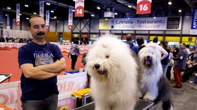 Perros en la feria de Ifema '100x100 mascota'