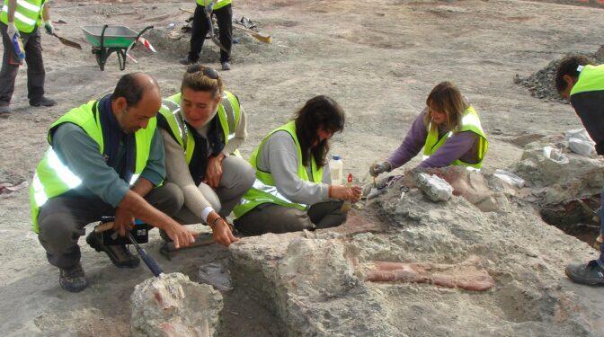 Hallan en Igea nuevos restos de un pequeño dinosaurio herbívoro