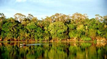 La Amazonía ha perdido en 36 años el equivalente a la superficie de Chile