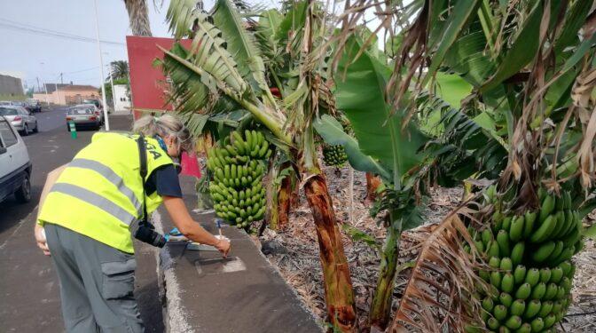 Muestras de ceniza e intensidad sísmica: los palmeros toman el pulso al volcán con ciencia ciudadana