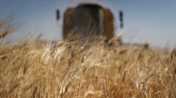 El trigo en las lonjas se dispara un 30% en un año y los huevos casi un 18%